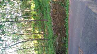 Residential Land for Sale in Ernakulam, Piravom, Piravom, Pazhoor Mamalakkavala