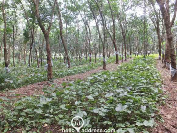 Agricultural Land for Sale in Kollam, Pathanapuram, Pathanapuram