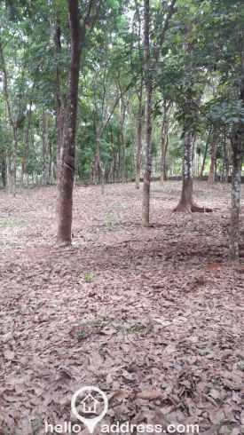 Residential Land for Sale in Idukki, Thodupuzha, Manakkad