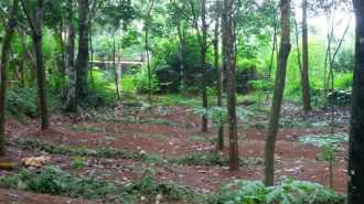 Residential Land for Sale in Alleppey, Mavellikkara, Kattanam, Varenickal