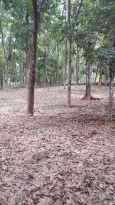 Residential Land for Sale in Idukki, Thodupuzha, Manakkad, Nediyasala  Kavala
