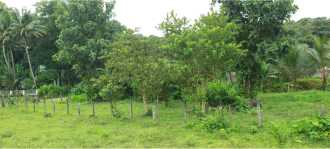 Residential Land for Sale in Kottayam, Pala, Pala