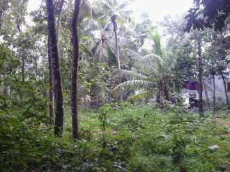 Residential Land for Sale in Trivandrum, Thiruvananthapuram, Peroorkada, Kachani
