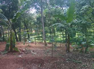 Residential Land for Sale in Pathanamthitta, Ranni, Pazhavangadi