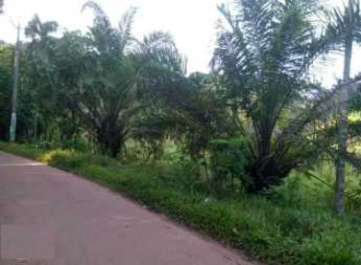 Agricultural Land for Sale in Pathanamthitta, Adoor, 14th Mile, Thengunthara jn