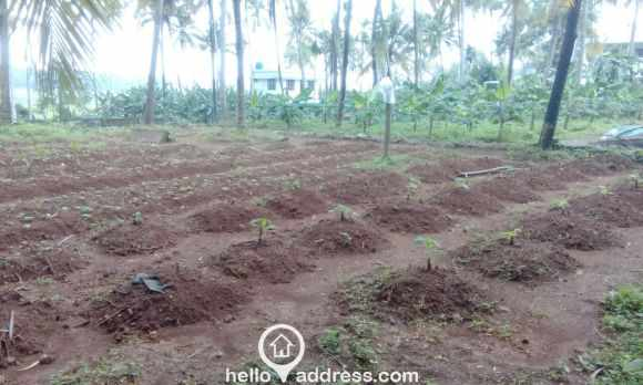 Residential Land for Sale in Thrissur, Thrissur, Arimboor