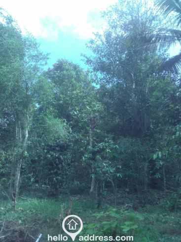 Commercial Land for Sale in Idukki, Nedumkandam, Thokkupalam