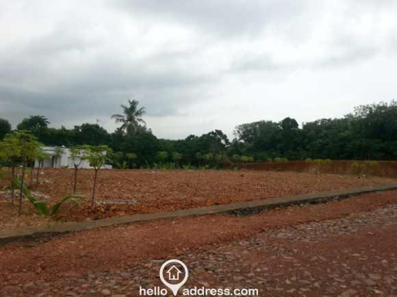 Residential Land for Sale in Kottayam, Thalayolaparambu, Thalayolaparambu