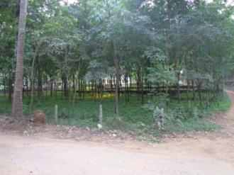 Residential Land for Sale in Kozhikode, Thamarassery, Kodenchery