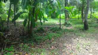 Residential Land for Sale in Alleppey, Mannar, Mannar