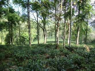 Agricultural Land for Sale in Idukki, Kattappana, Kattapana, UPPUTHARA