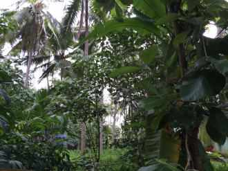 Residential Land for Sale in Trivandrum, Thiruvananthapuram, Kudapannakunnu, MNRA-153