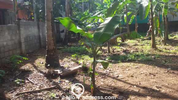 Residential Land for Sale in Kottayam, Changanassery, Thottackad