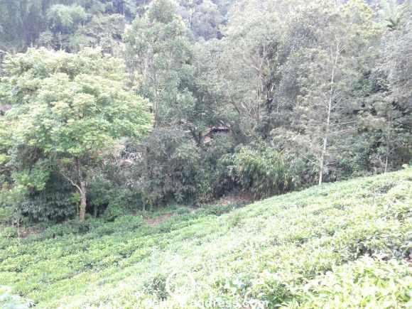 Agricultural Land for Sale in Idukki, Munnar, Munnar