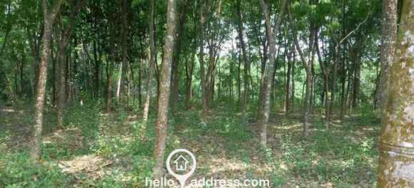 Residential Land for Sale in Kottayam, Ettumanoor, Kalathoor