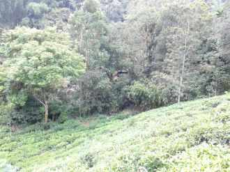 Agricultural Land for Sale in Idukki, Munnar, Munnar, Chithirapuram