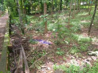 Residential Land for Sale in Kottayam, Changanassery, Pathamuttom, Pathamuttom