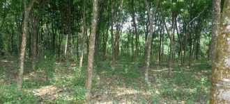 Residential Land for Sale in Kottayam, Ettumanoor, Kalathoor
