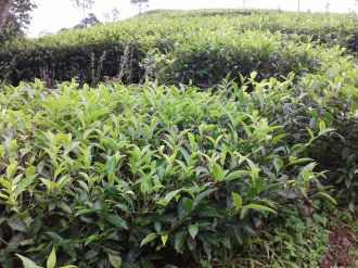 Agricultural Land for Sale in Idukki, Wagamon, Vagaman
