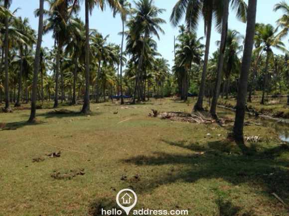 Residential Land for Sale in Thrissur, Kodungallur, Kodungallur