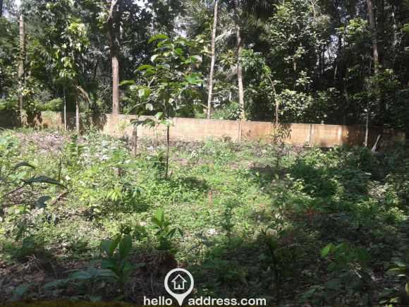 Residential Land for Sale in Kottayam, Kottayam, Ammanchery