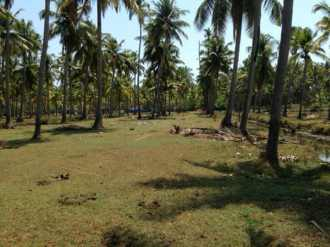 Residential Land for Sale in Thrissur, Kodungallur, Kodungallur, gothuruth bridge