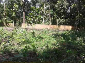 Residential Land for Sale in Kottayam, Kottayam, Ammanchery