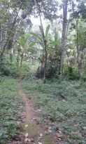 Residential Land for Sale in Ernakulam, Aluva, Aluva, Vazhakulam