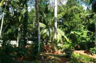 Residential Land for Sale in Trivandrum, Neyyattinkara, Kanjiramkulam