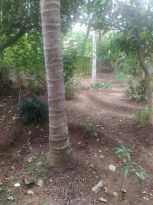 Residential Land for Sale in Trivandrum, Thiruvananthapuram, Peroorkada