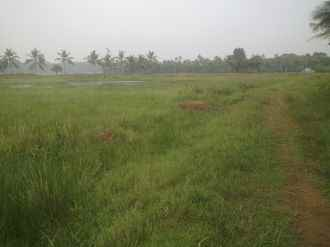 Residential Land for Sale in Kottayam, Kadathuruthy, Kaduthuruthy, Ezhumanthuruthu