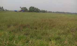 Agricultural Land for Sale in Kottayam, Vaikam, Kallara