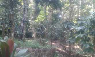 Residential Land for Sale in Idukki, Nedumkandam, Nedumkandam, Mundiyoor