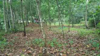 Residential Land for Sale in Kottayam, Pala, Kondad