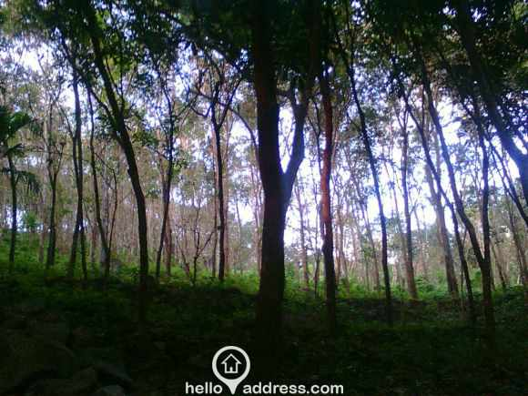 Agricultural Land for Sale in Kollam, Punalur, Punalur