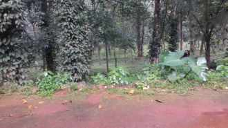 Commercial Land for Sale in Idukki, Thodupuzha, Manakkad