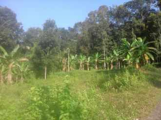 Residential Land for Sale in Kottayam, Pala, Paika, Kuruvikoodu