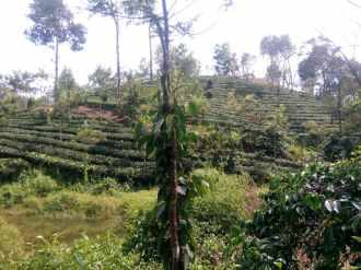 Residential Land for Sale in Idukki, Munnar, Munnar, Kallar