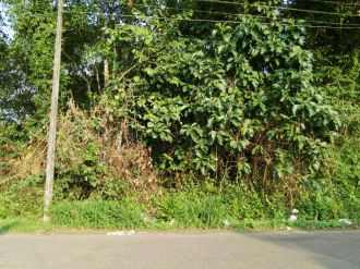 Residential Land for Sale in Kottayam, Kottayam, Pallom, Buchana