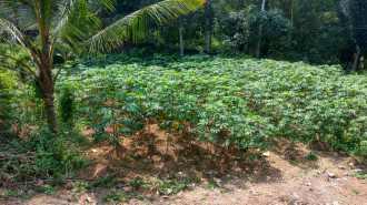 Residential Land for Sale in Kottayam, Changanassery, Cheeranchira