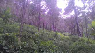 Agricultural Land for Sale in Kottayam, Pala, Mankombu, Moonnilavu