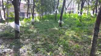 Agricultural Land for Sale in Kottayam, Ponkunnam, Ponkunnam, Elamgulam