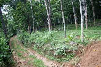 Agricultural Land for Sale in Pathanamthitta, Mallappally, Ezhumattoor, Areekkal, Chalappally, Kerala