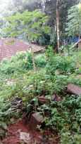 Residential Land for Sale in Kottayam, Changanassery, Pathamuttom