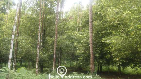 Agricultural Land for Sale in Thrissur, Chalakudy, Meloor
