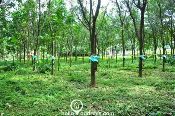 Residential Land for Sale in Ernakulam, Kothamangalam, Kothamangalam town
