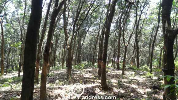 Agricultural Land for Sale in Kottayam, Pampady, Lakkattoor