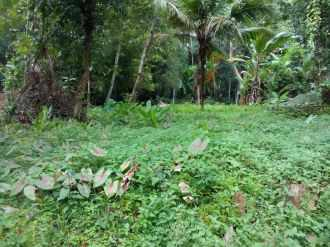 Residential Land for Sale in Pathanamthitta, Kozhencherry, Melukara