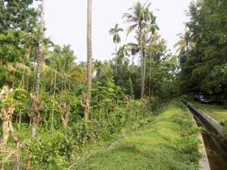 Agricultural Land for Sale in Ernakulam, Perumbavoor, Kombanad