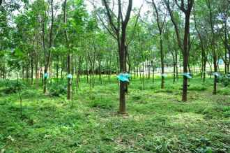 Residential Land for Sale in Ernakulam, Kothamangalam, Kothamangalam town, Nellimattom